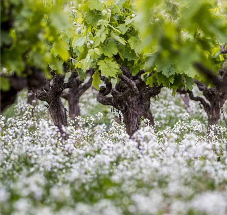 Our determination for biodiversity comes from concern for sustainability in the growing vines.